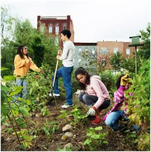Community Gardeners Gathering @ The Mason Square Library | Springfield | Massachusetts | United States